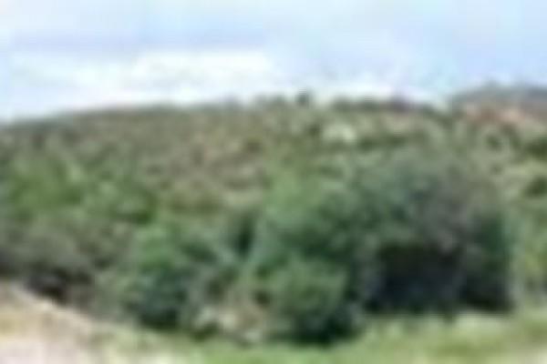 Lotes de terreno en Tierra Alta